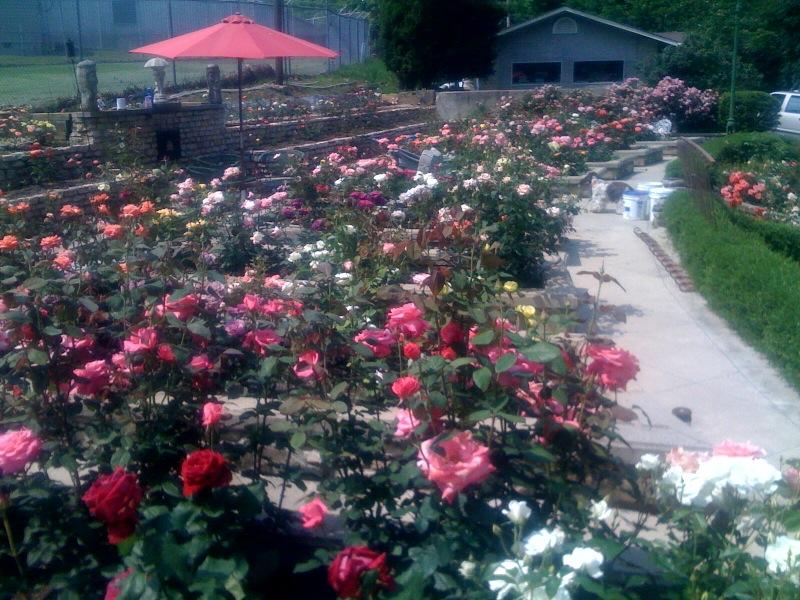 Rose Societies In Columbus Ohio